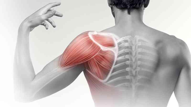 плечевой сустав2